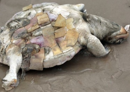 2010_05_03_turtle