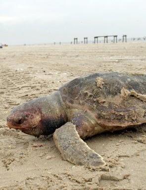 2010_05_04_turtle